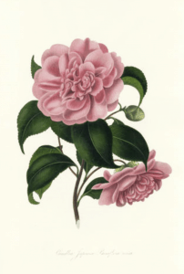 Rare Botanical Value